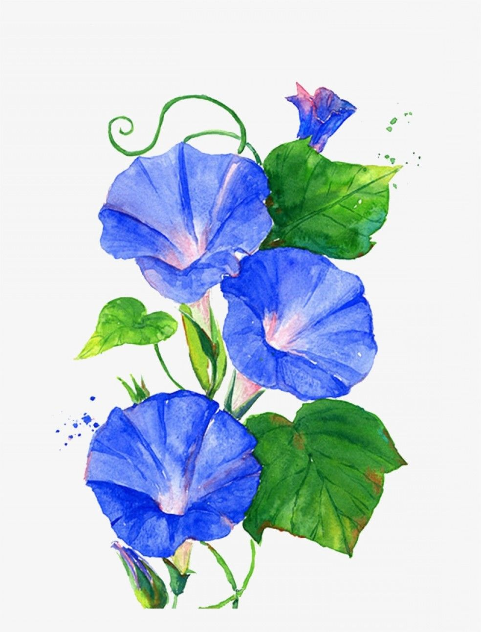 Pin by lovata on CLIPART LIBRARY in 2020 Flower art
