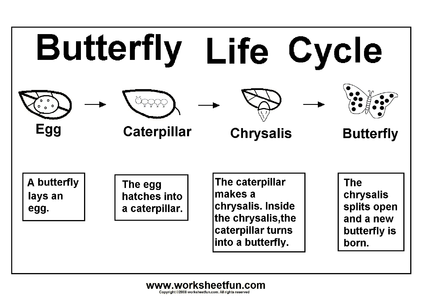 Butterfly Life Cycle – Worksheet   Kindergarten worksheets printable [ 1054 x 1492 Pixel ]