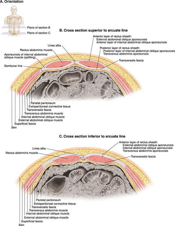 Ovid: Lippincott Williams & Wilkins Atlas of Anatomy | anatomy ...