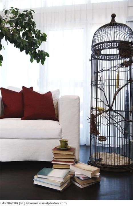 Check Out That Bird Cage Bird Cage Decor Eclectic Living Room Living Decor