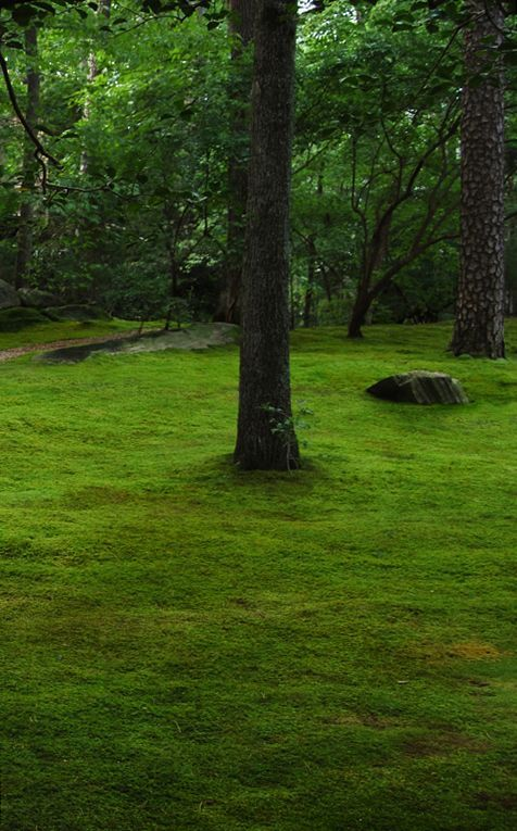 Marvelous How To Grow Moss | Moss And Stone Gardens Blog BEST DETAILED INFO!