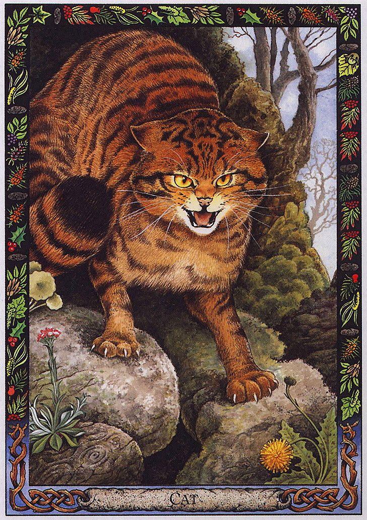 Animal Tarot: LRS - The Druid Animal Oracle