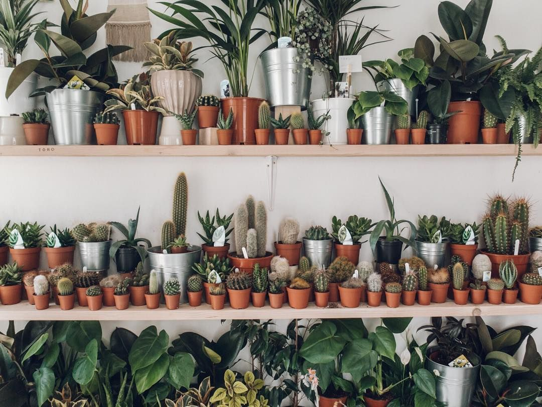 We love a good plant shop. We visited here (@toro_studio) in the summer