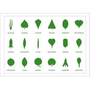 Botany Leaf Cabinet Control Chart  Home School Classroom