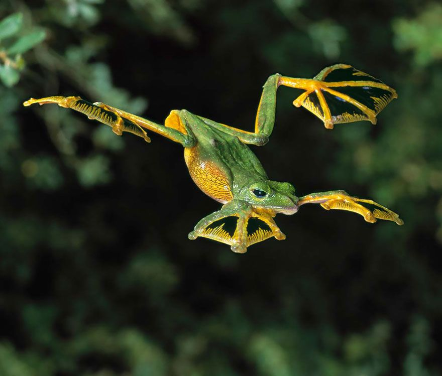 12 of the Coolest Frogs and Toads from Around the World, http://itcolossal.com/frogs/