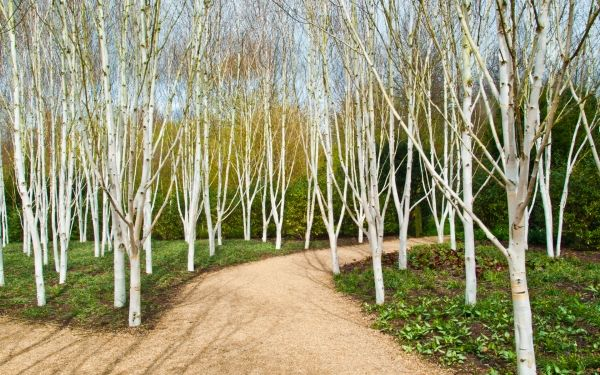 himalayabirk gruppe - Google-søgning Havedesign Pinterest - paisaje jardin
