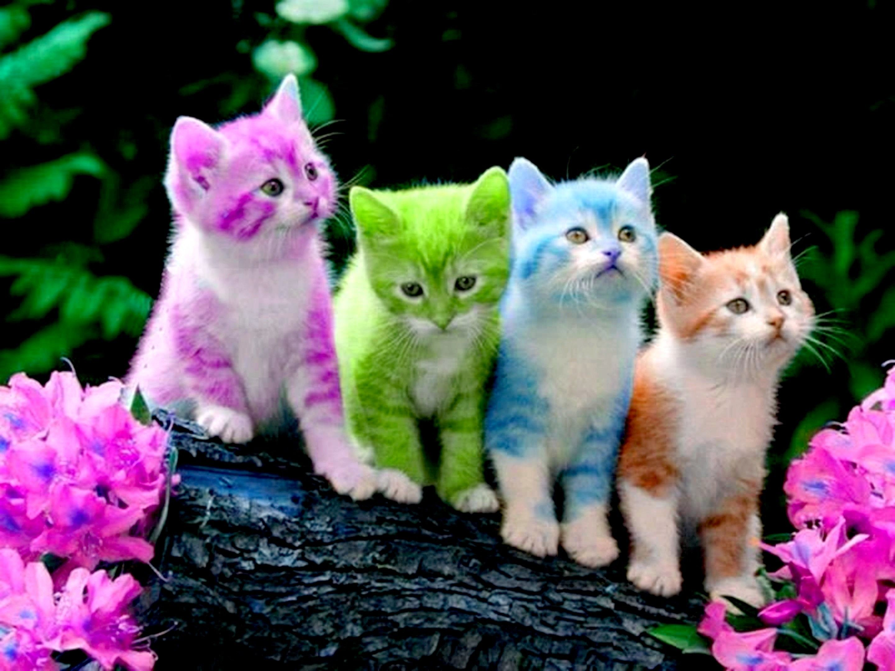 Res 2880x2160 Free Cute Kitten Wallpapers Wallpaper A Download A Animals Rainbow Kittens Cute Cats Beautiful Cats