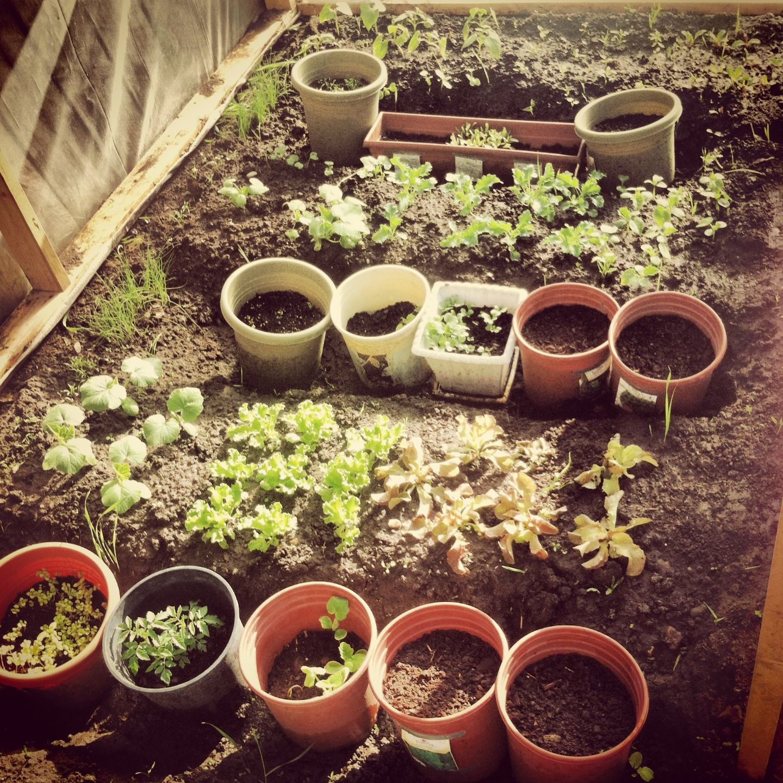 Our DIY greenhouse Diy greenhouse, Growing food