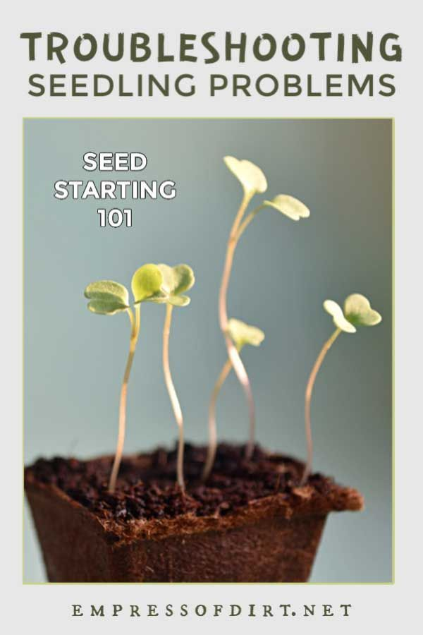 If your seeds are not germinating this troubleshooting guide will help you determine why Here are a few Indoor gardening tips for the beginner who wants to grow a home ve...