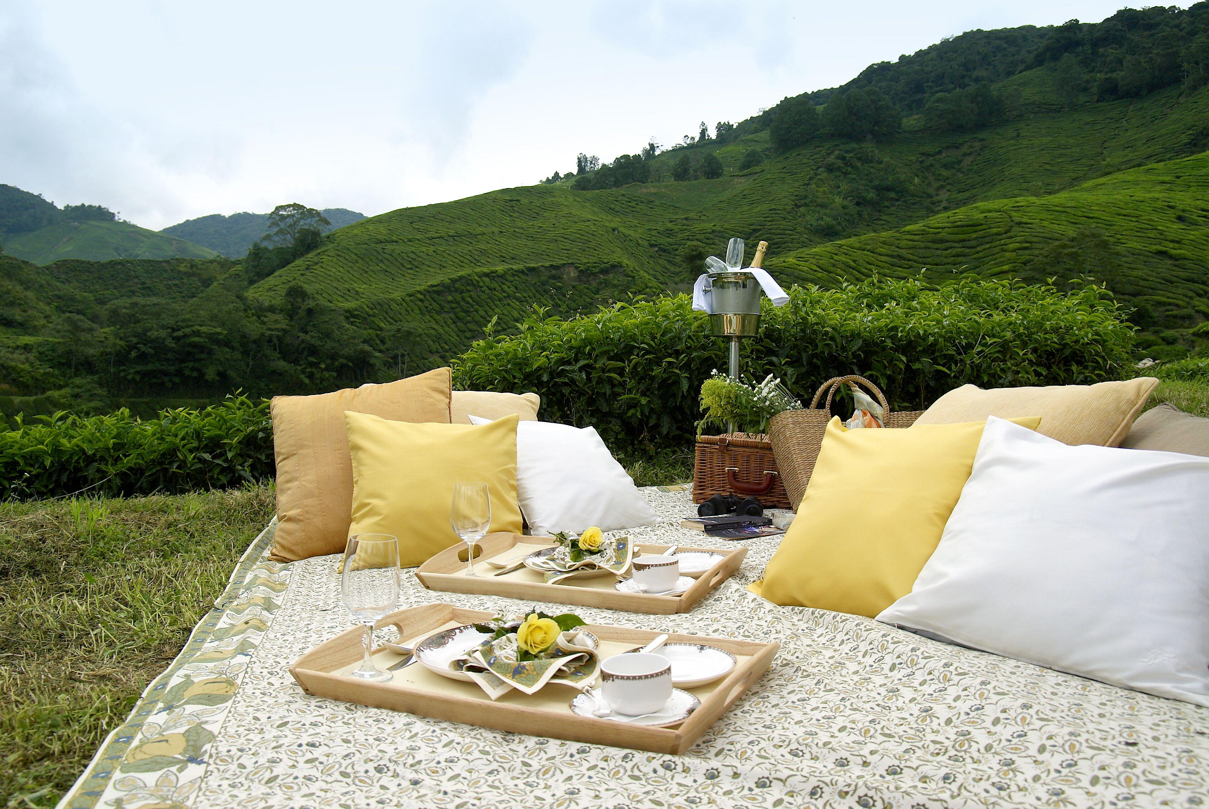 swanky picnic setup. Cameron highlands, Romantic picnics