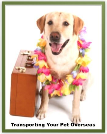Transporting Your Pet Overseas Your Pet Pets America Gifts