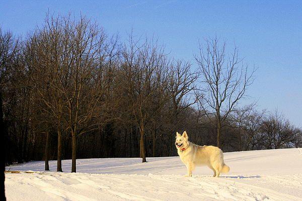 "http://pinterest.com/pin/create/button/?url=http://fineartamerica.com/featured/the-dog-on-the-hill-kay-novy.html=http://fineartamerica.com/images-medium-5/the-dog-on-the-hill-kay-novy.jpg  ""The Dog On The Hill"" by Kay Novy. http://kay-novy.artistwebsites.com/"