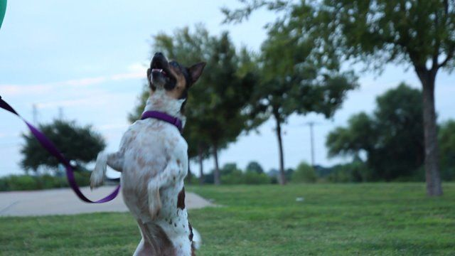 "To learn how to adopt a ""Ruff Life"" dog, visit Dallas Pets"