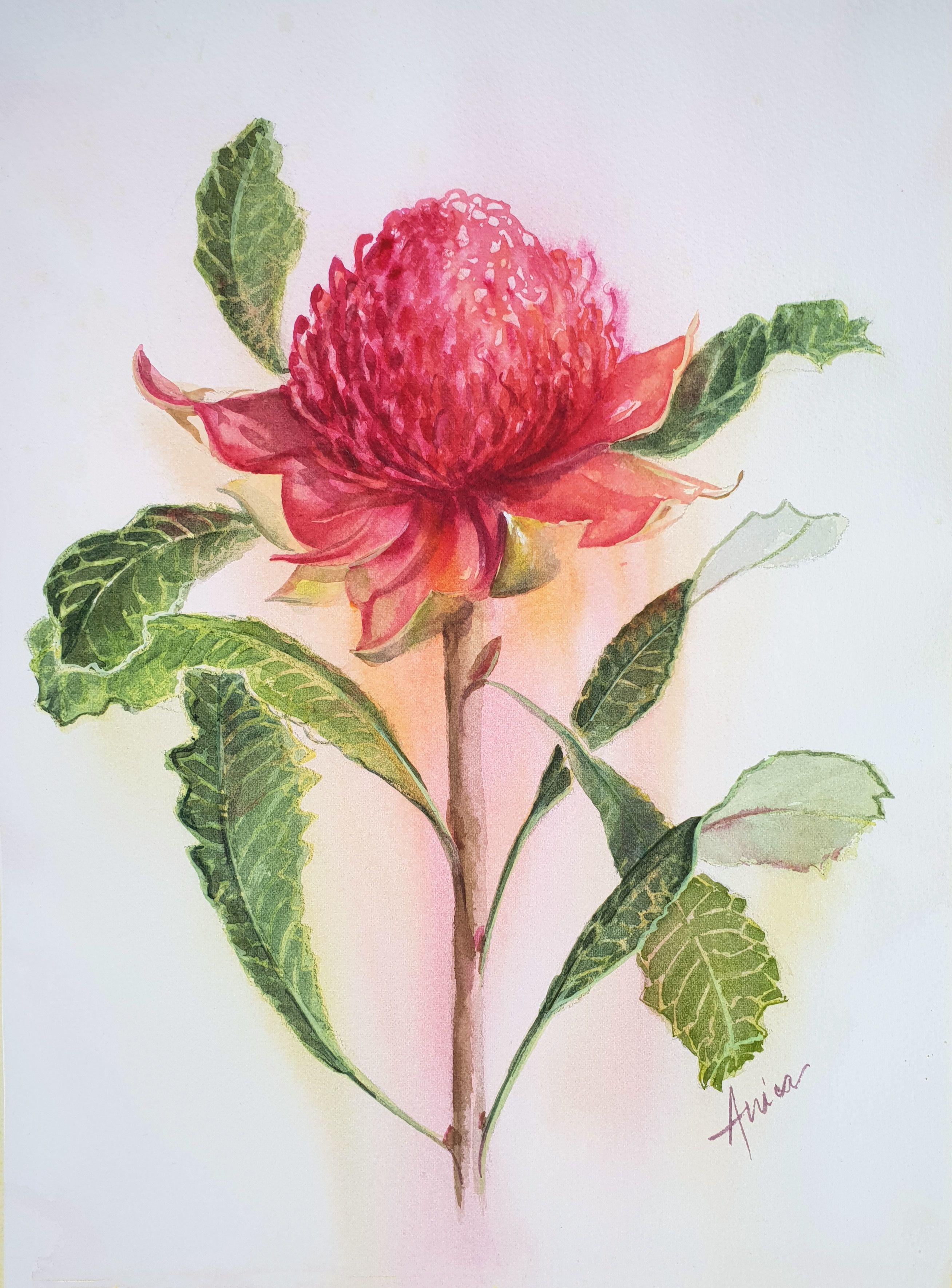 Pin by Helen on Australian Flowers in 2020 Watercolor