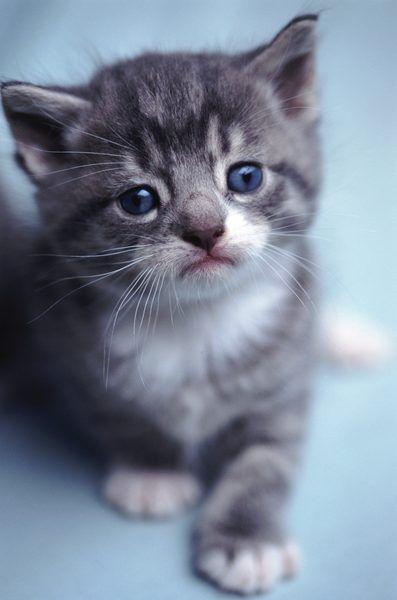 Can Kittens Have Catnip 6 Week Old Kitten Cat Biting Kitten Care
