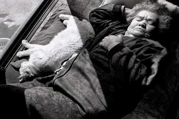 伊原美代子︰老祖母與她的小白貓