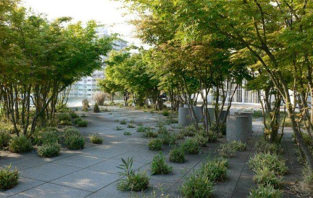 landschaftsbau modern bodenplatten bäume gräser kugeln Garten - paisaje jardin