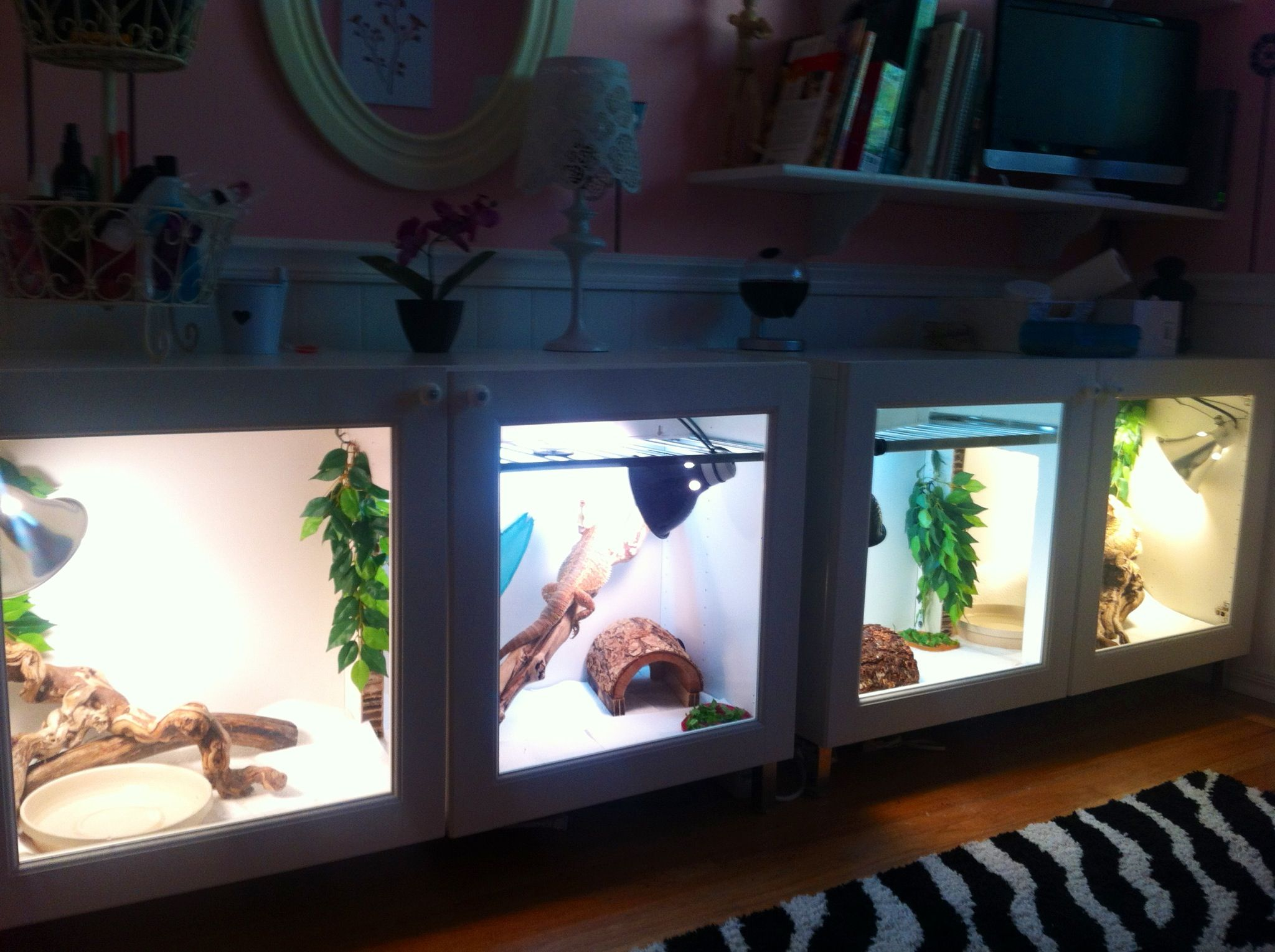 Our Bearded Dragon cages ..IKEA BESTA cabinets hacked into two cages ...