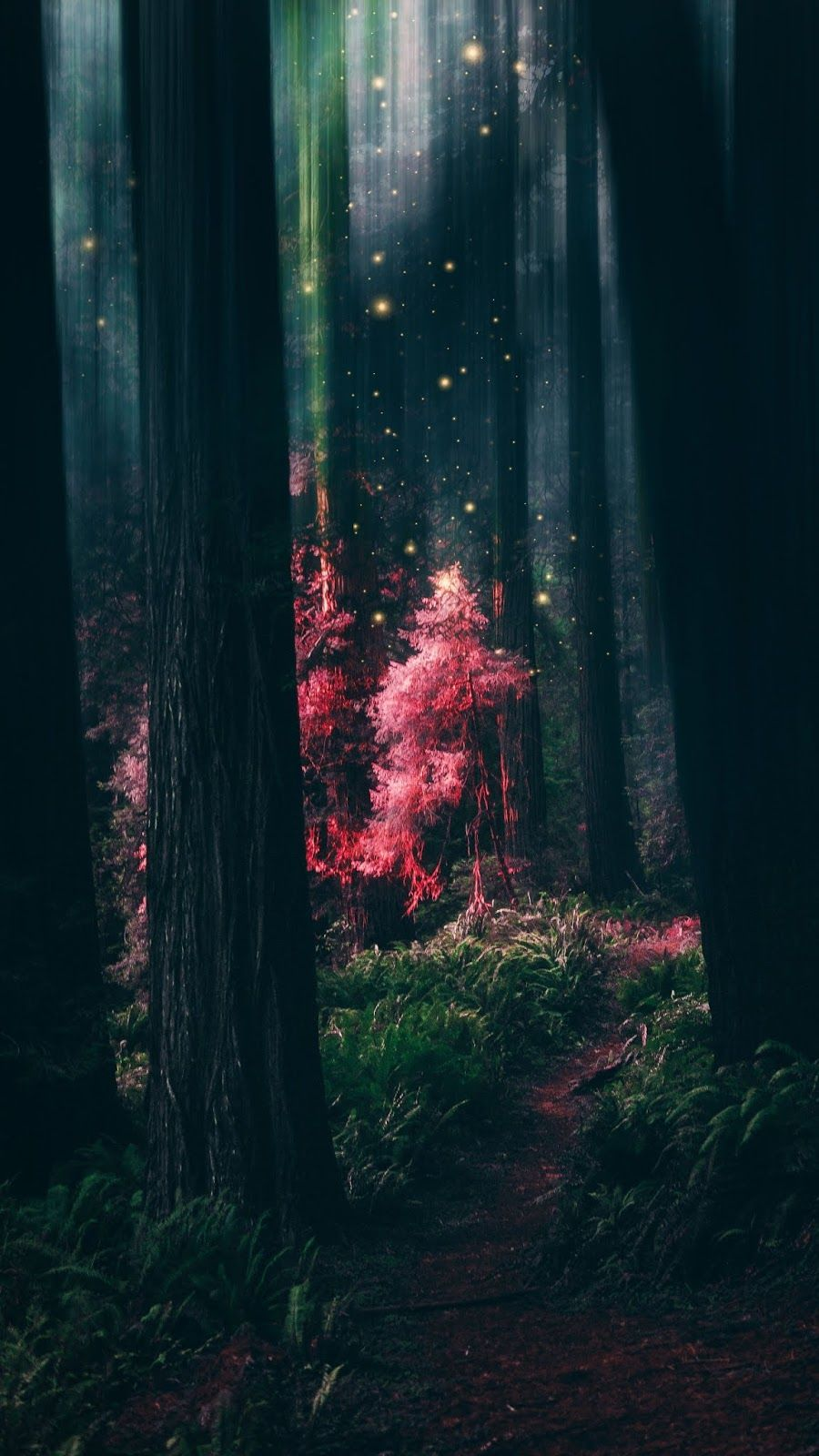 Mystical Forest Wallpaper Iphone