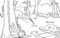 Wetlands Coloring Sheets Yahoo Image Search Results Wetland