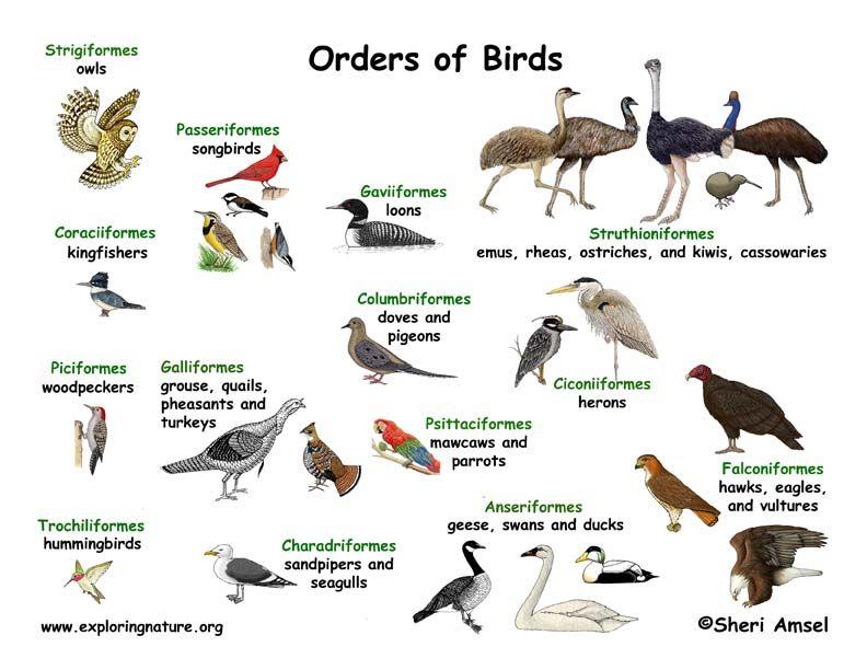 essay on importance of birds