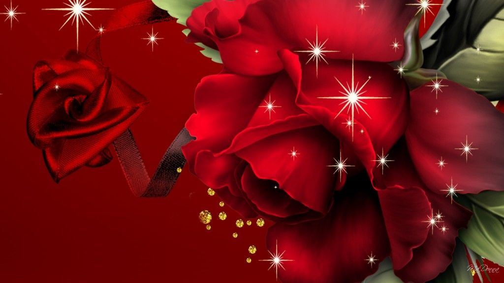 big red rose hd desktop background only hd wallpaper frames