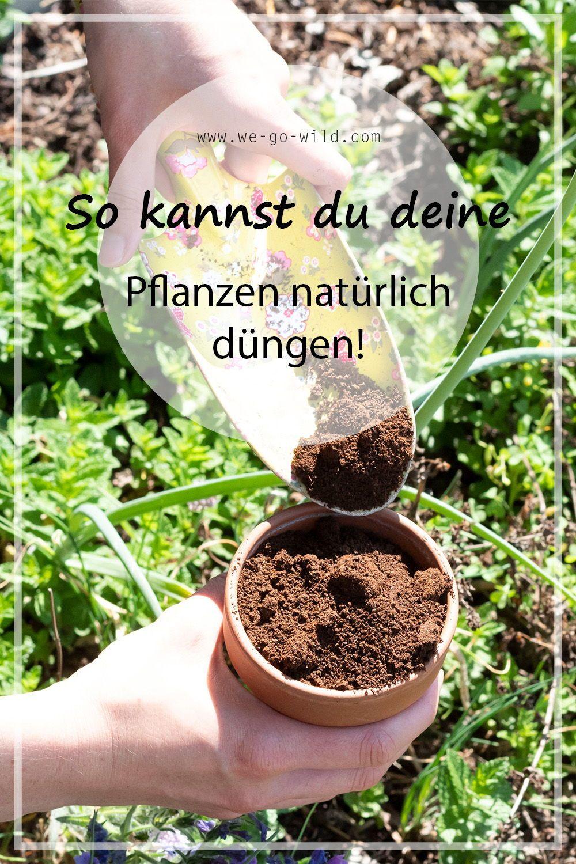 Kaffeesatz Als Dunger Fur Garten Und Topfpflanzen We Go Wild Pflanzen Kaffeesatz Ameisen Im Garten