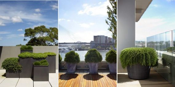Plantes am nagement terrasse jardin decoration verdure for Decoration jardin terrasse
