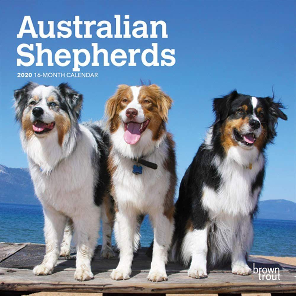 Australian Shepherd 2020 Mini Wall Calendar Australian Shepherd
