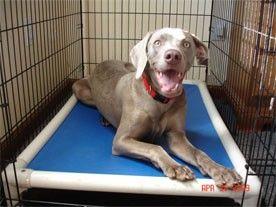 Almond Pvc Crate Bed Indestructable Dog Bed Kuranda Dog Beds