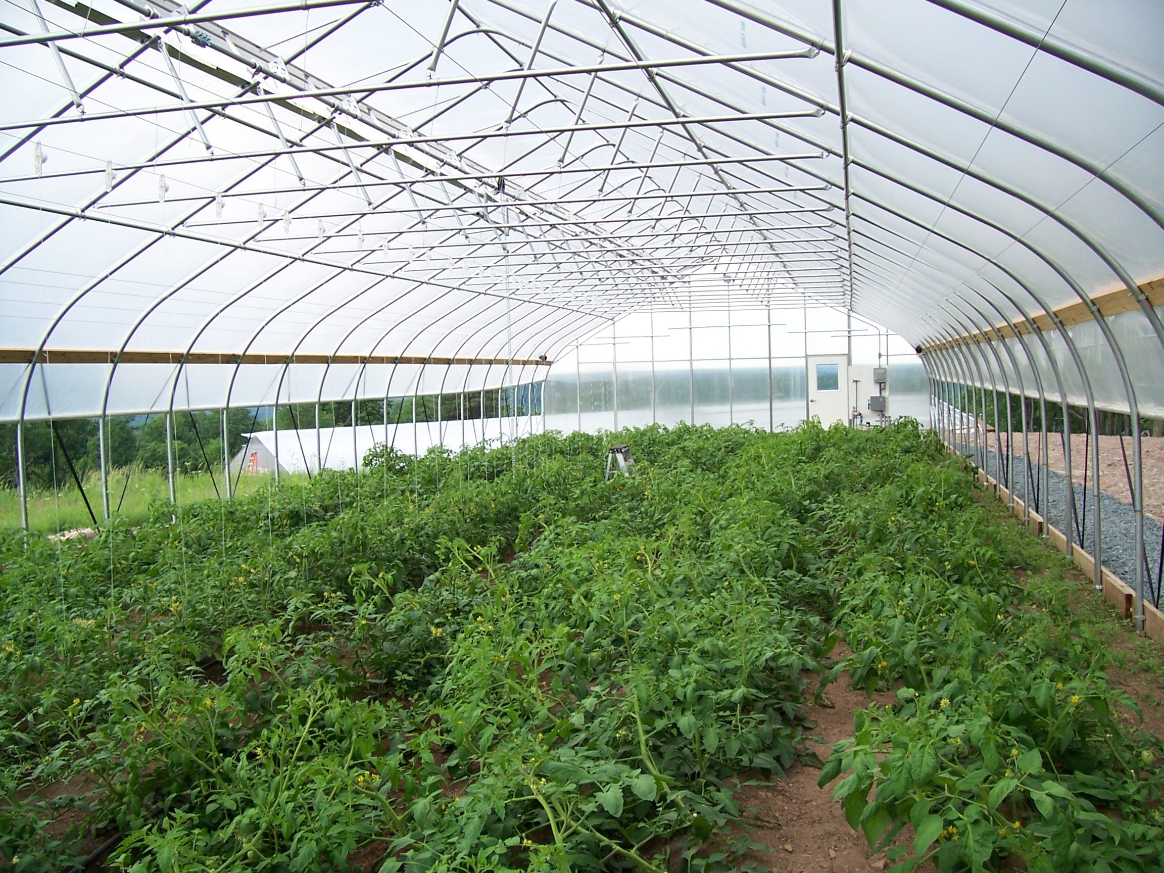 center for discovery is harris ny operates a rimol greenhouse systems high tunnel to grow - Rimol Greenhouse Of Photos