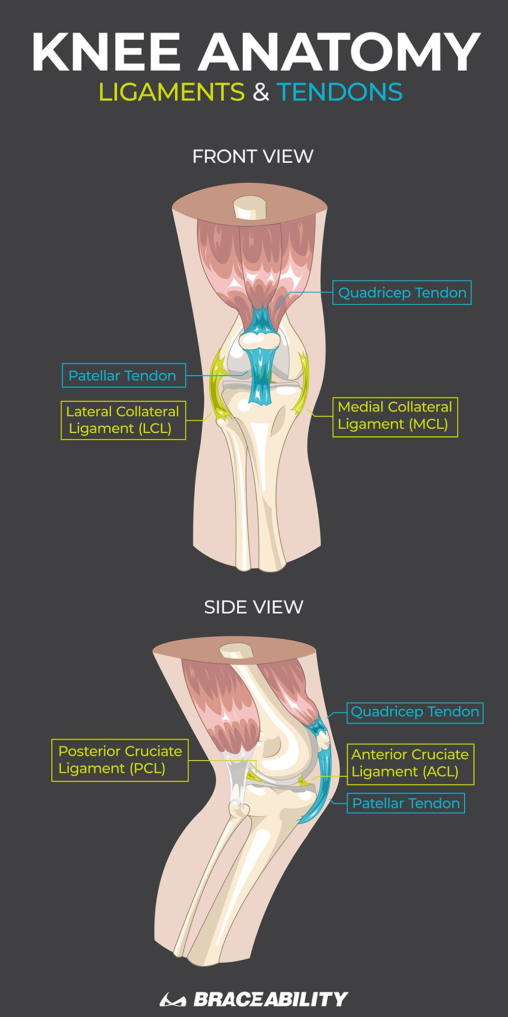 Pain Behind the Knee / In Back of Knee