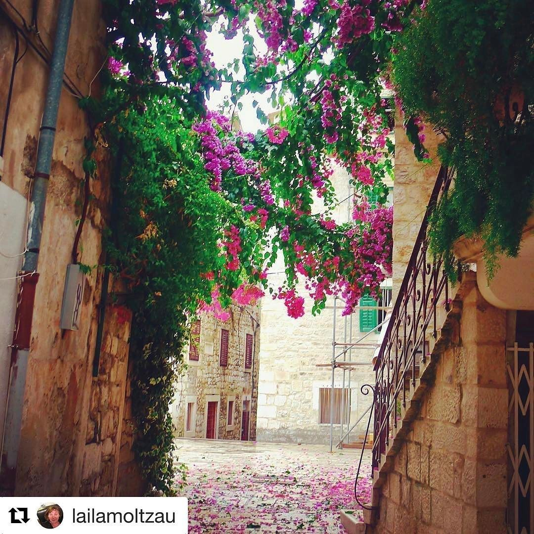 Hit skal jeg i mai. Noe ekstra tips @lailamoltzau ? Må se må oppleves spisesteder? #reiseblogger #reiseliv #reisetips  #Repost @lailamoltzau with @repostapp  Flower power - Split  Croatia  #split #croatia #croatiafulloflife #croatien #reiselust #reiselyst #reiseblog #ilovecroatia #flowerstagram #flowery #blomster #blommor #ilovetravel #photography #photographer #photooftheday #photoofthedays #sailing #sailingcroatia #travelgram_