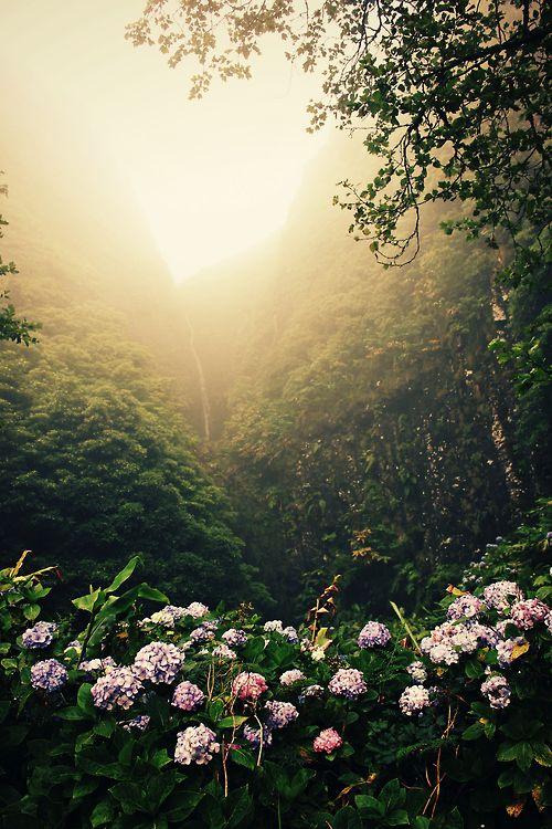 La luz de paraíso...