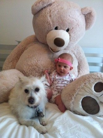Top 10 Reasons Dogs Are Like Babies - Dogbook - wagworkwine.com http://bit.ly/14uYV5M