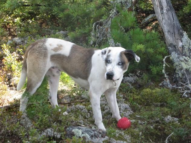Adopt Baloo On Petfinder Rehoming Dogs Animals
