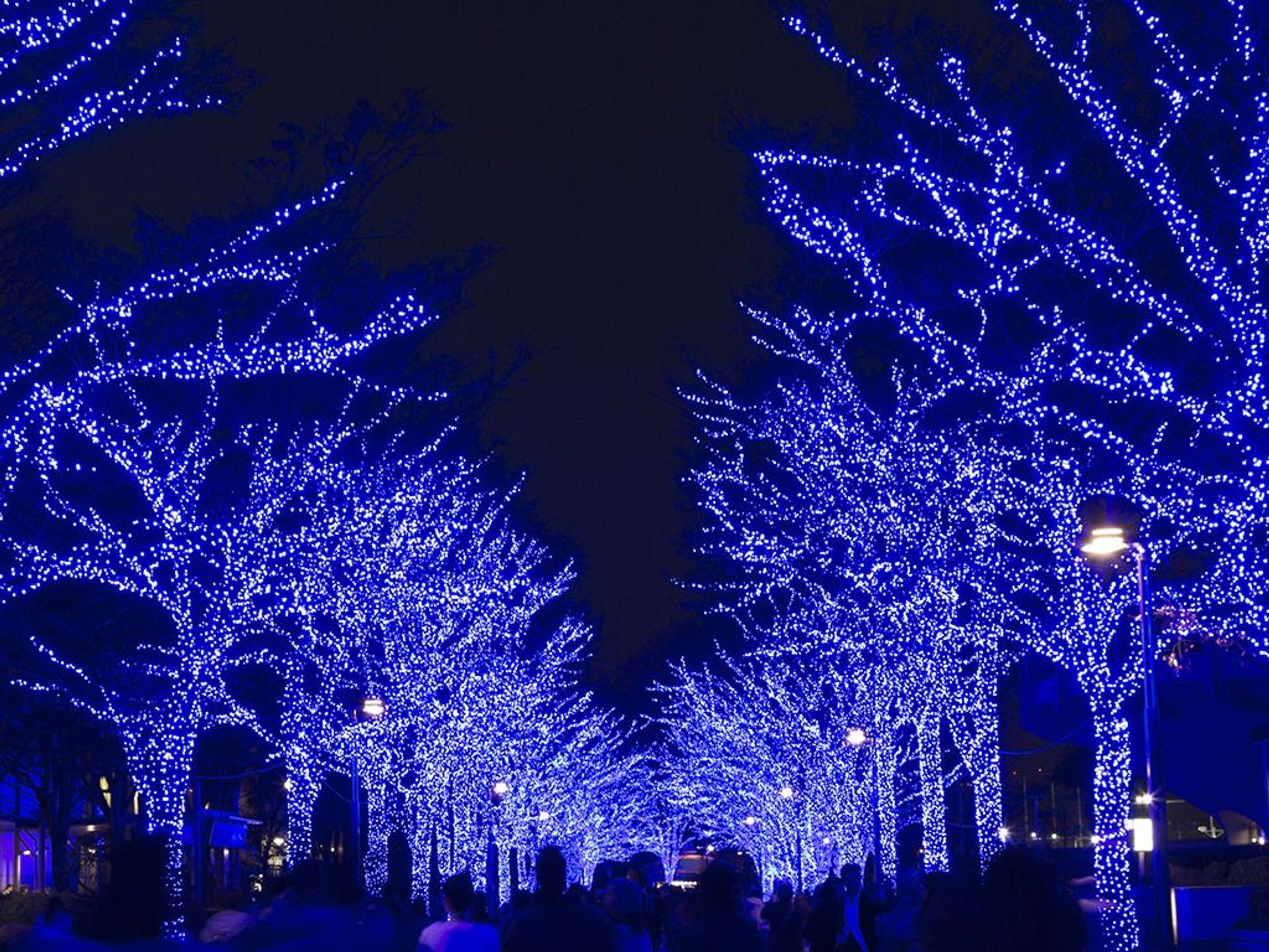 Photos Of 25 Stunning Christmas Light Displays Around The World Christmas Light Displays Light Display Christmas Lights