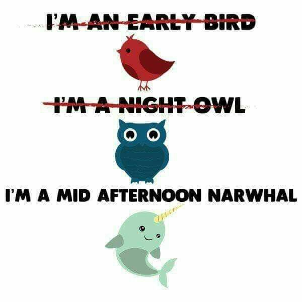 I M Not An Early Bird Or A Night Owl I M A Mid Afternoon Narwhal