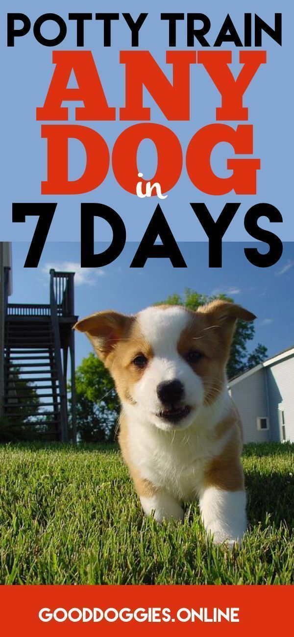 Potty Train Your Dog In 7 Days Or Less Good Dog Info Dogs