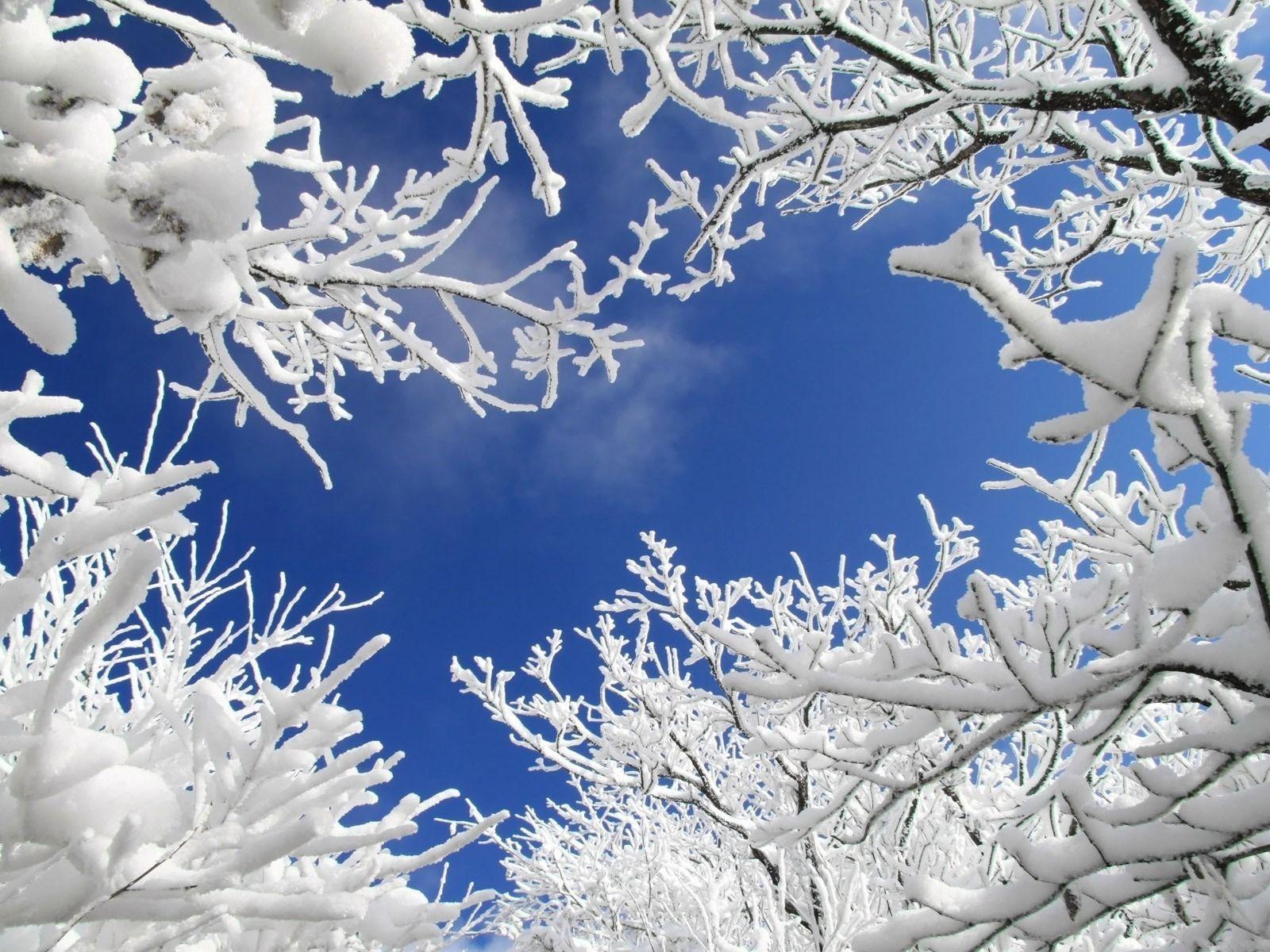 Winter Background Winter Sky Free Winter Wallpaper Hd wallpaper snow winter nature branches