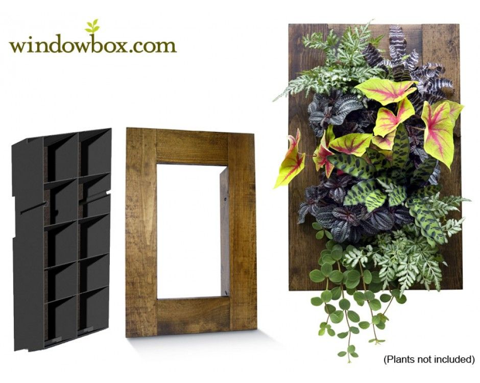Indoor Living Wall Kit With Rustic Frame Diy Projects Vertical Garden Kits Systems Pots Planters Windowbox