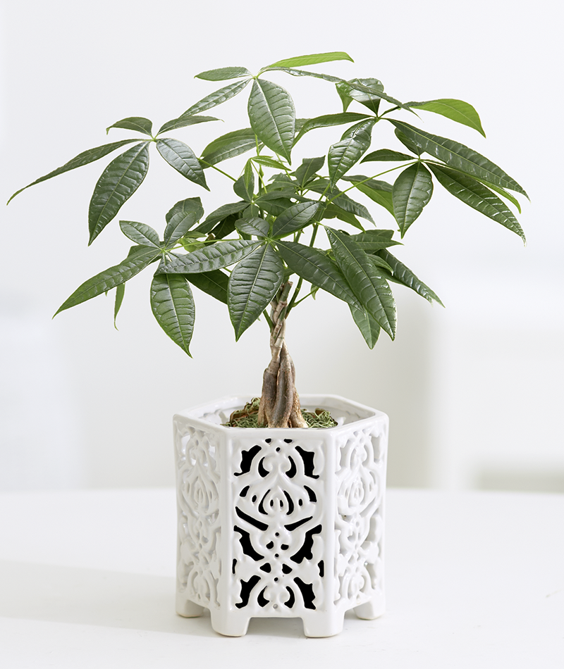 10 plants you can t kill no green thumb needed plantopedia buy indoor plants plants. Black Bedroom Furniture Sets. Home Design Ideas