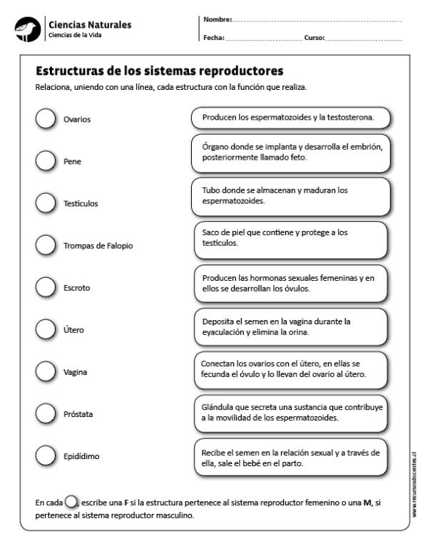 Estructuras De Los Sistemas Reproductores Ciencias De La