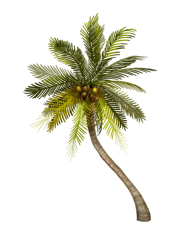Download Tropical Coconut Palm Tree Illustration For Free Coconut Tree Drawing Tree Illustration Palm Trees Painting