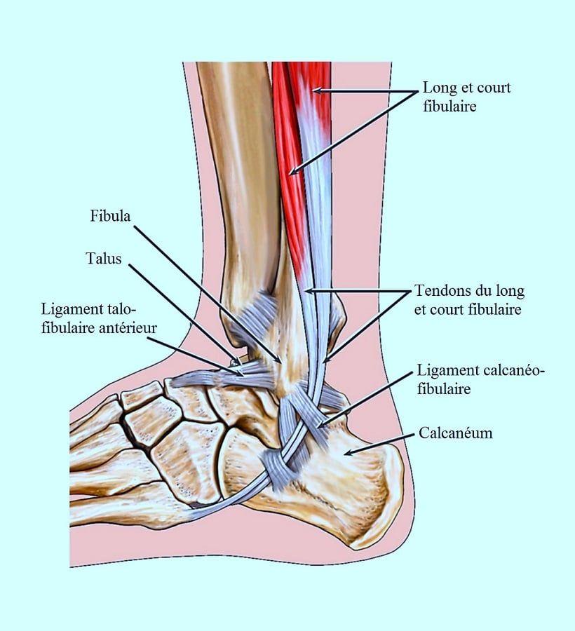 douleur ligament pied