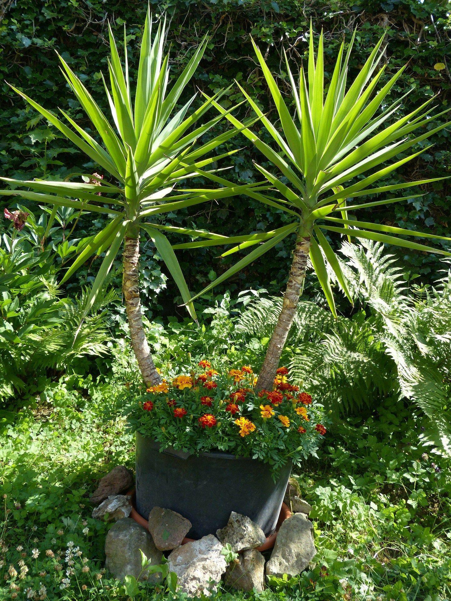 Giardinaggio facile: le migliori piante per principianti ...