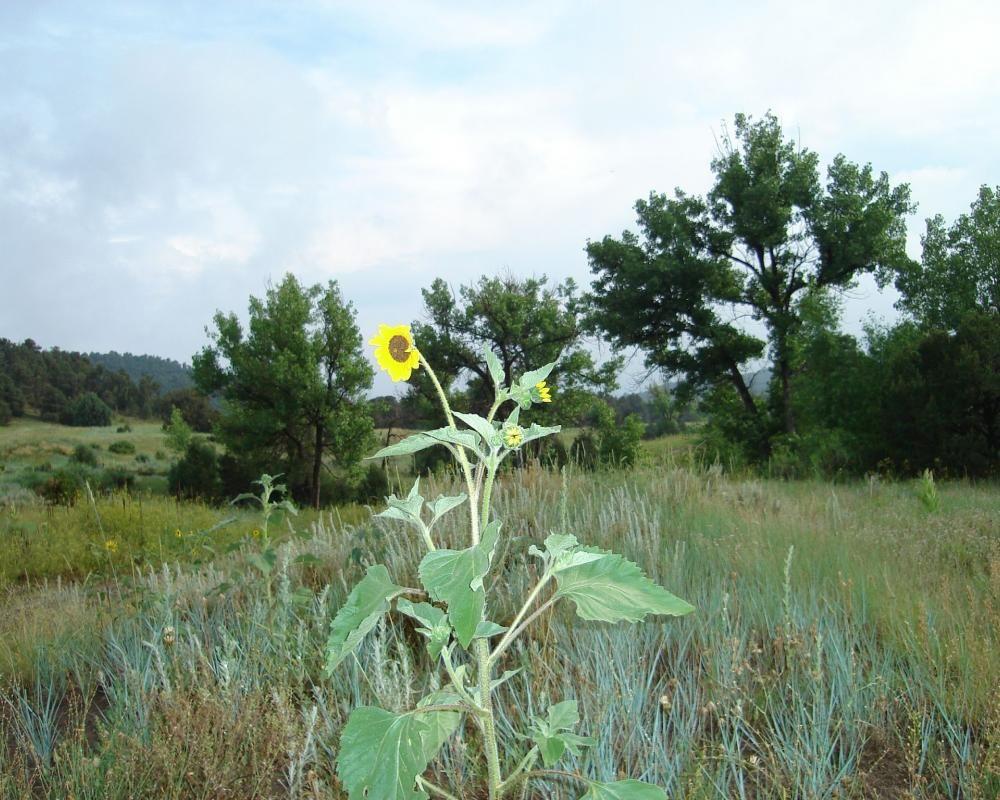 53 Acres Picketwire Ranch | Hayden Outdoors
