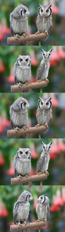 Owls lol Humor Pinterest Owl, Animal and