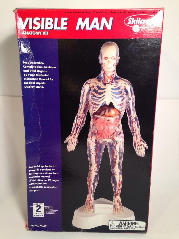 Visible Man Anatomy Kit Model Unbuilt By Skill Craft Vintage 90s