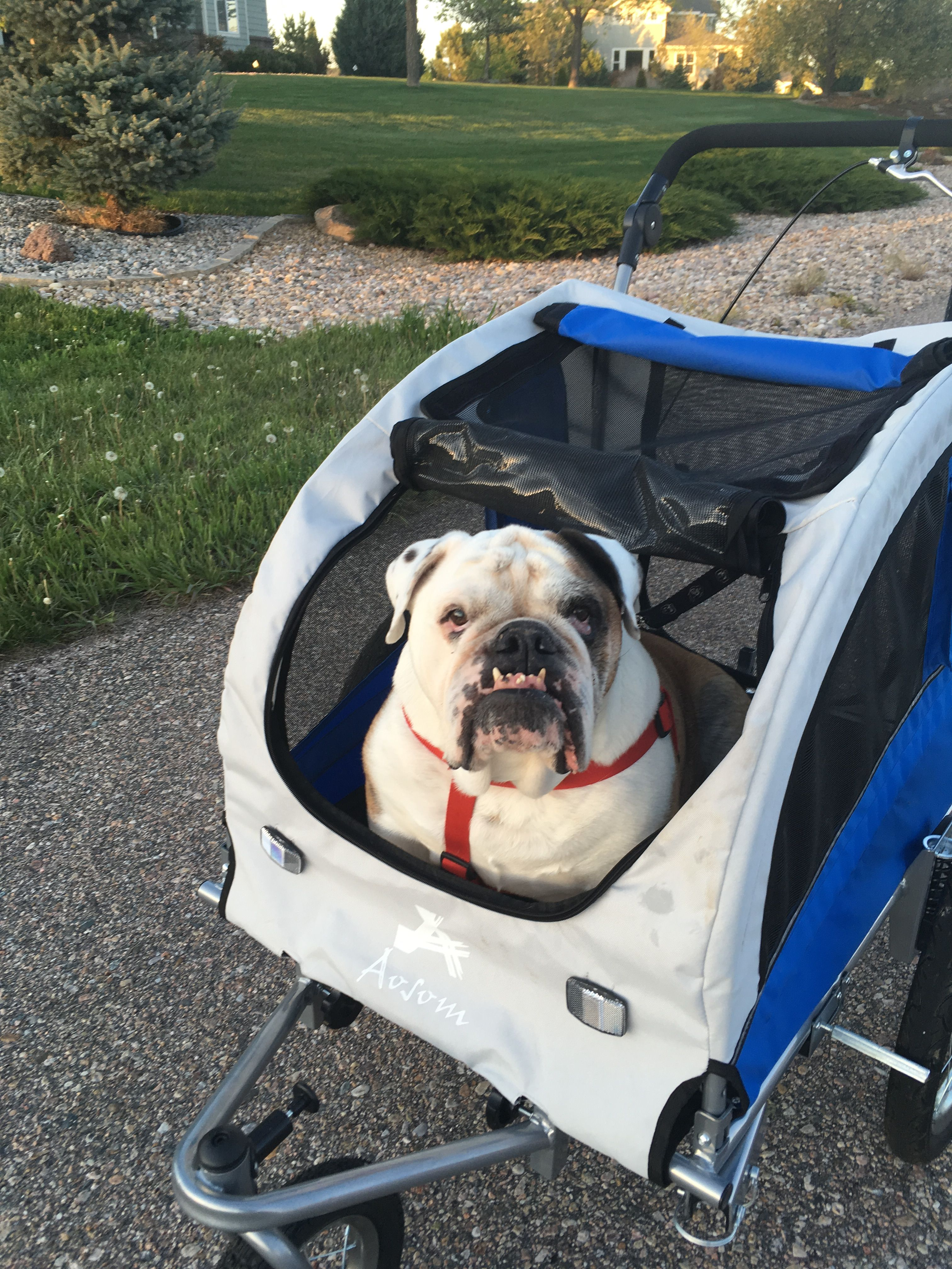 Bulldog Stroller With Images Funny Dogs Beautiful Dogs Stroller